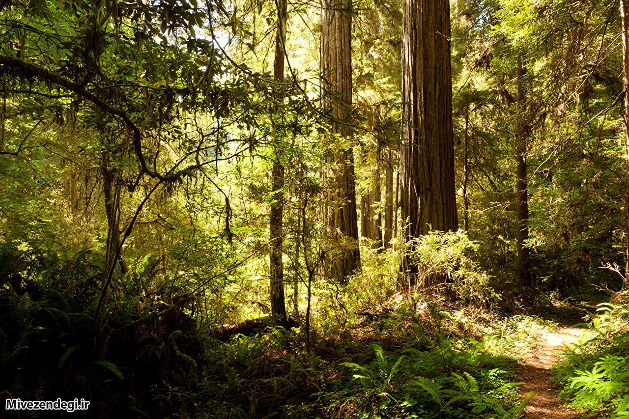 جنگلداری